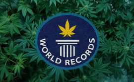cannabis-world-records